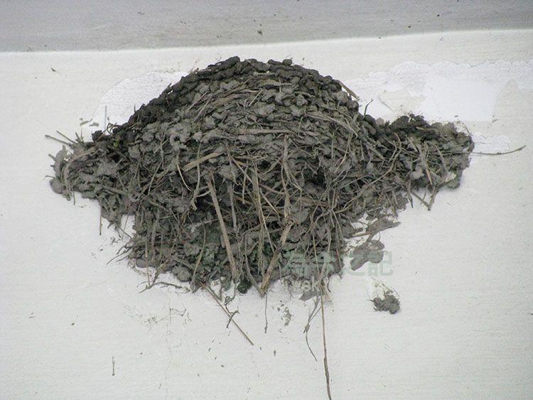 燕巢明顯有新修築的痕跡(2013年4月24日上午九點)
