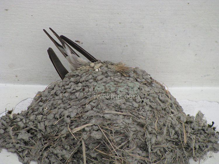 ▲圖6:期待小燕子孵出。